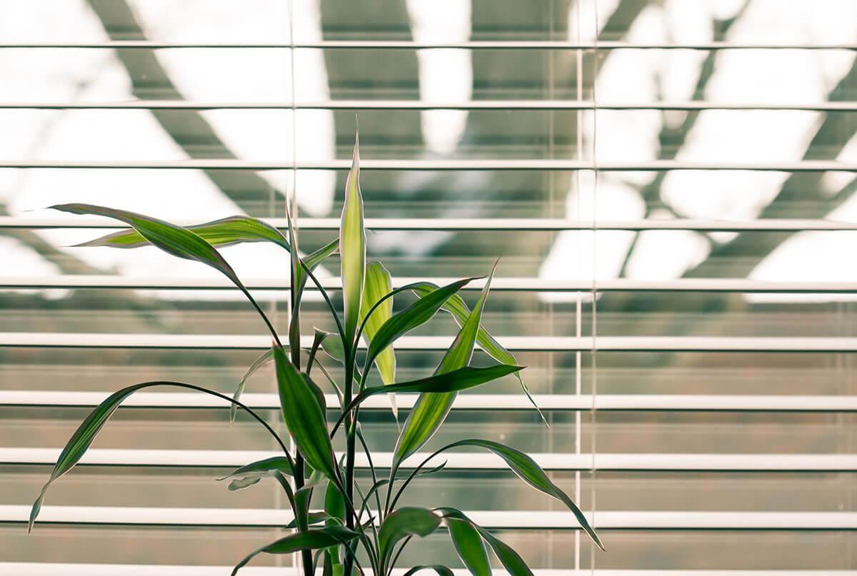 persianas en tu decoración